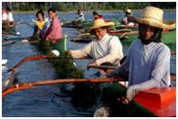 Philippine Women Fisherfolks
